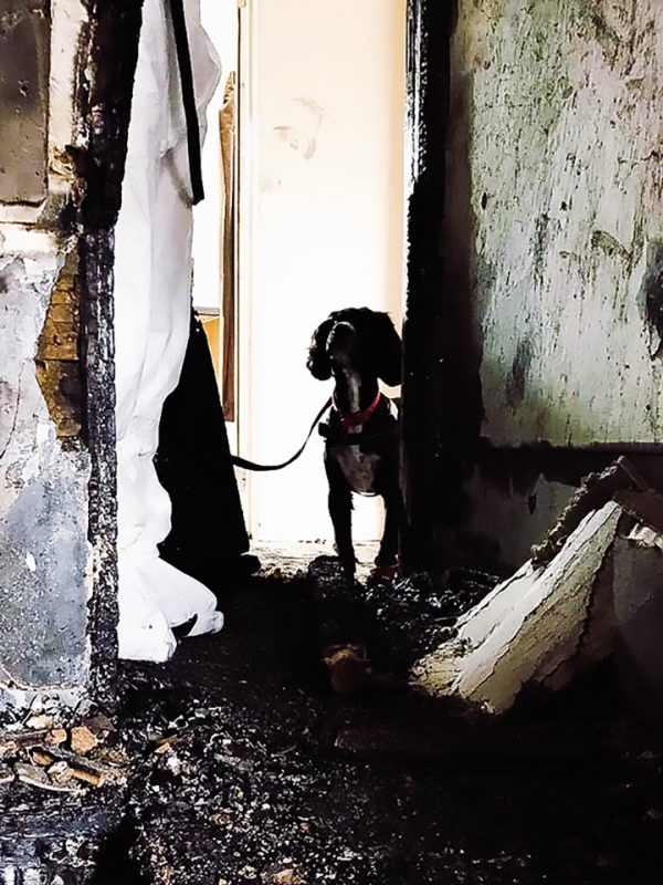 Sherlock Searches Fire Damaged Building